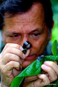 Carlos de la Rosa insectos